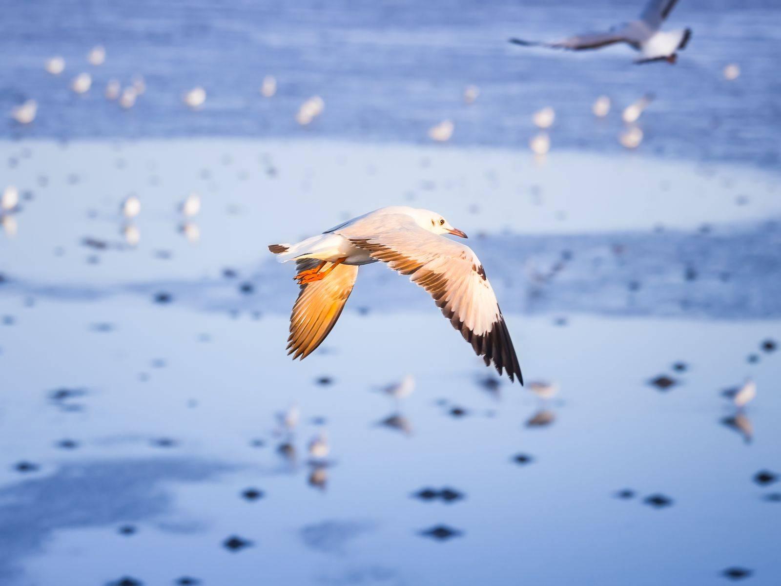 Flying Pigeons at Bang Pu