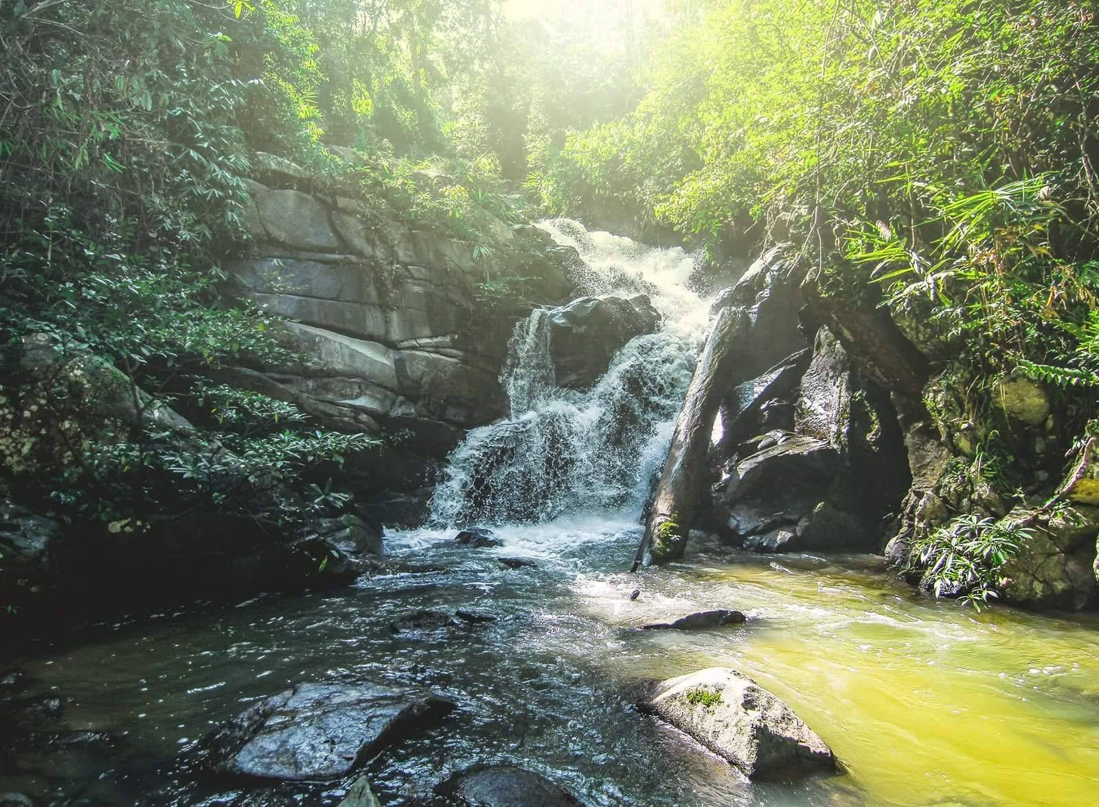 Day trip to the Verdant Rainforest, Secluded Waterfall, and Take Care of the Elephants!
