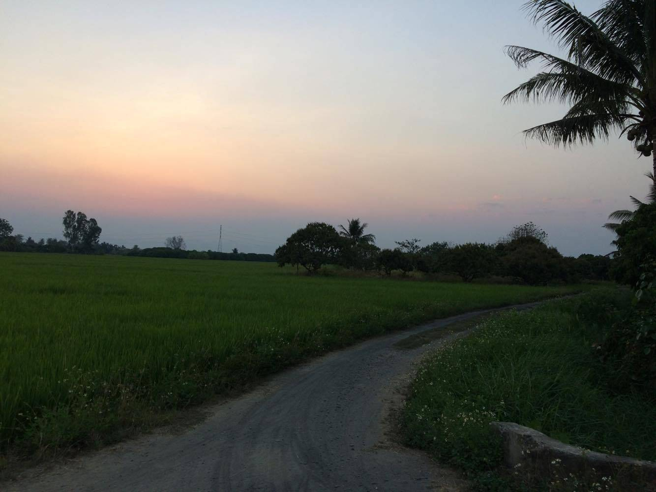 Cycling Tour to Rice Field and Local Handicraft Village