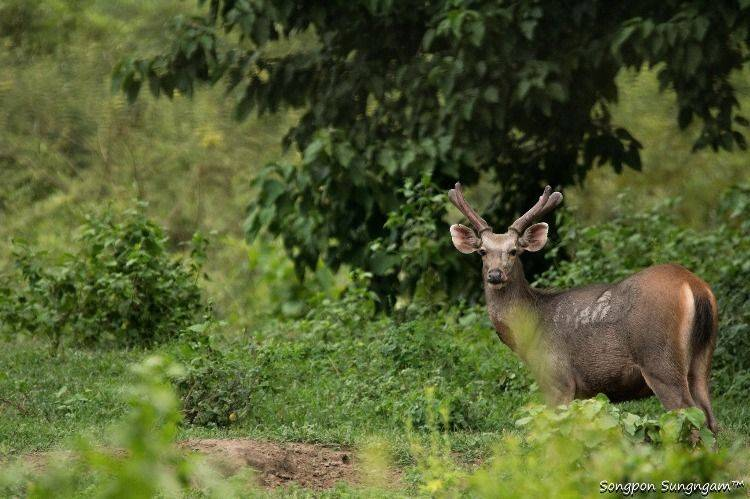 Exploring Wildlife's home & Getting to know Thai nature