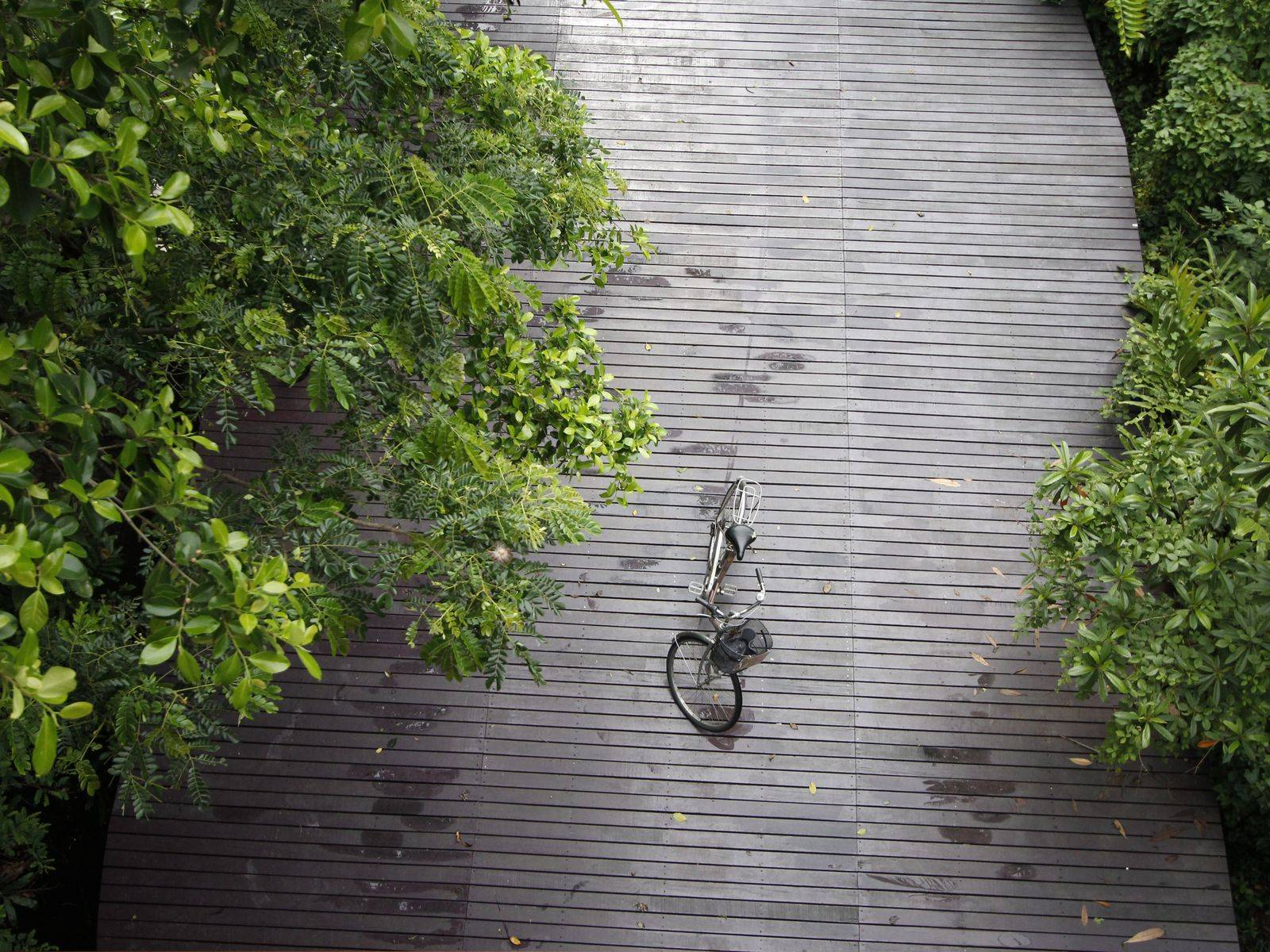 Take a Bike Tour of Bangkok's Green Lung