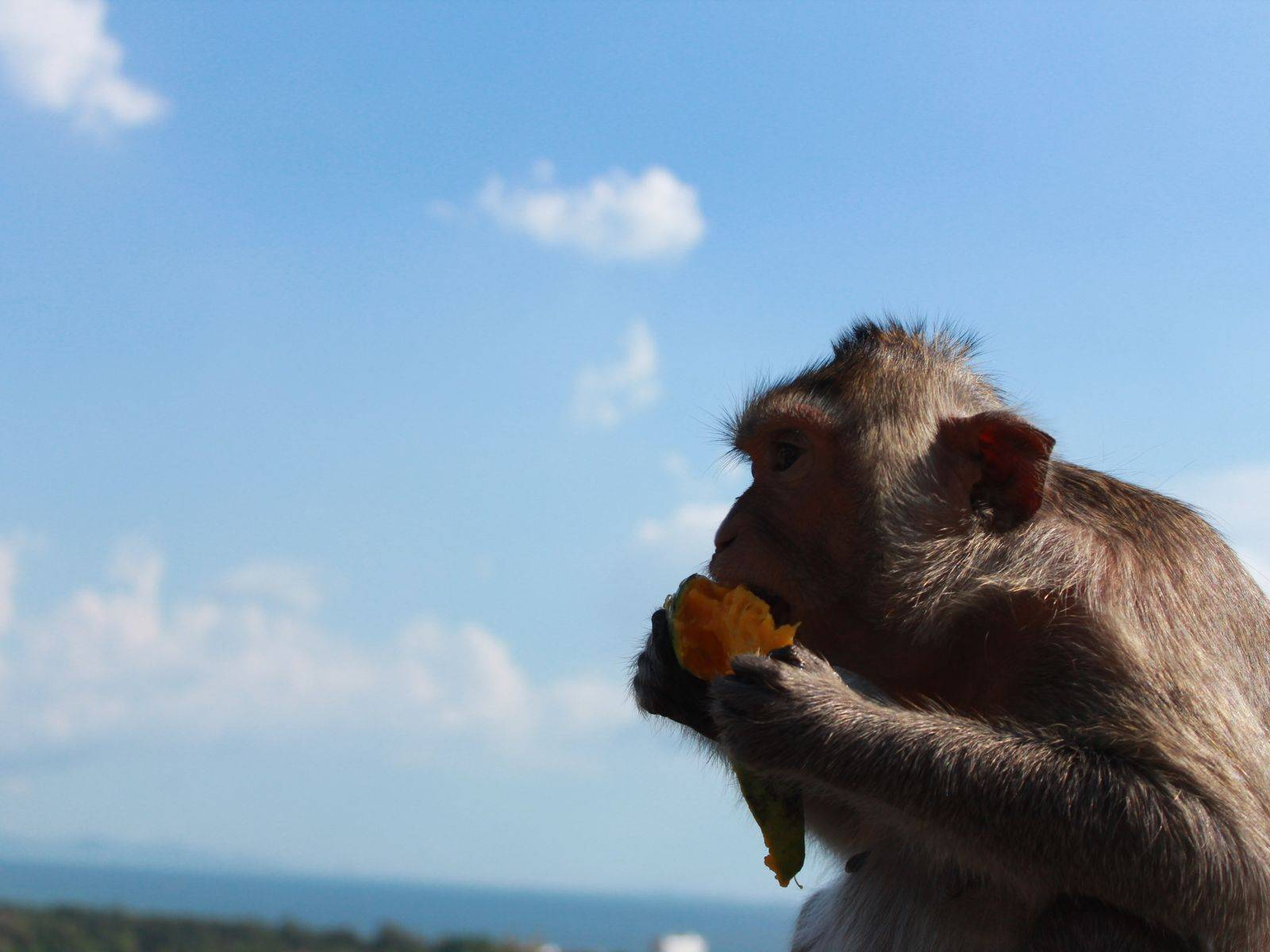 Undisturbed Islands & Monkey Feeding!