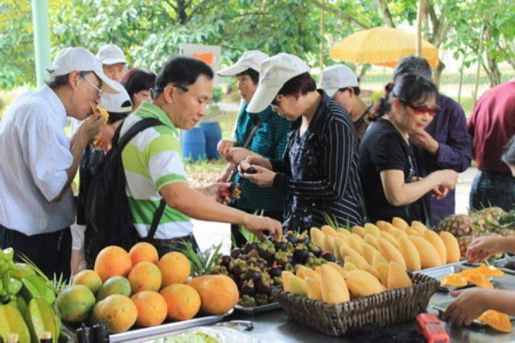 Tasting Thai Fruits Fresh from The Farm (All You Can Eat)