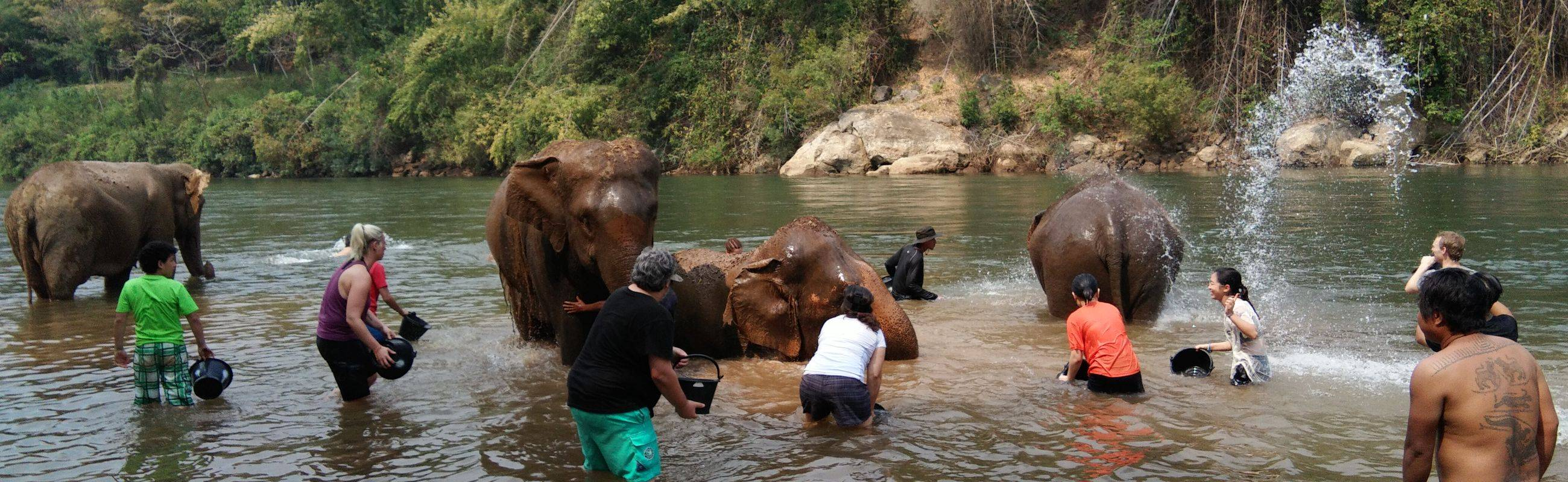 Ethical Tourism to the Elephant's Home in Kanchanaburi ( Day trip from Bangkok)