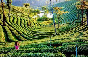 Chiang Rai White Temple & Blue temple with Tea plantation