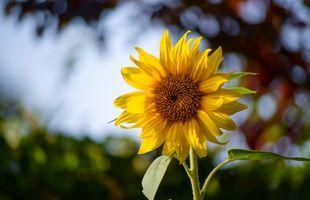 Explore Sunflower Field & Flower Garden at Khao Yai National Park