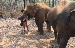 Elephants Caring in Forest Sanctuary (Full Day)