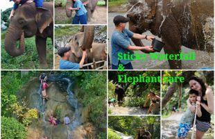 Sticky waterfall & Elephant Care