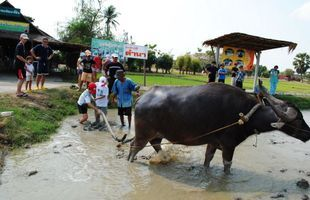 Buffalo Village and 100 Year Market  in Suphanburi ( Day trip from Bangkok)