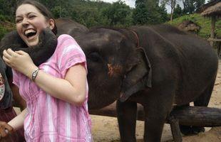 A Day to Explore Elephant Life Experiences