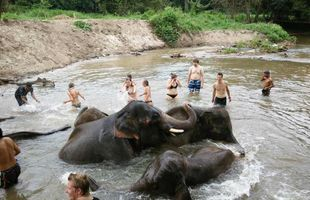 Elephants care & Hiking with a local life