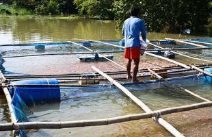 Seafood and fish farm