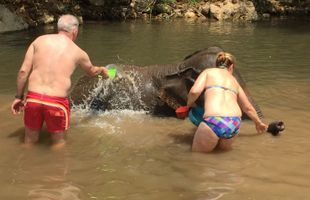 Let's Play with Elephant in Chiang Mai