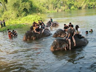 The Miracle of Kanchanaburi : City Tour and Elephant Village