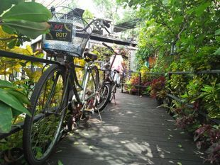 Cycling in Bang Kra Jao for One day