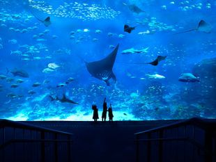 บัตรเข้าพิพิธภัณฑ์สัตว์น้ำ S.E.A. สิงคโปร์ ราคาพิเศษ (S.E.A. Aquarium Singapore)
