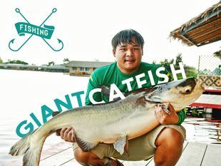 Fishing for Giant Catfish and Carp