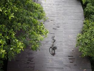 Take a Bike Tour of Bangkok's Green Lung