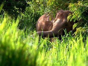 See Elephants and Wildlife On a Tour of Kui Buri National Park
