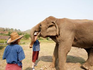 One-Day Elephant Sanctuary + Bamboo rafting + Long neck village and stopping at Tiger Kingdom Tour.