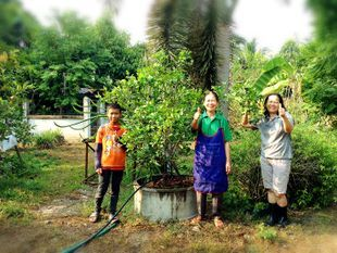 Organic Gardening in Chiang Mai