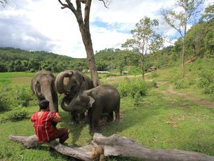 Caring The Elephants at Doi Inthanon Elephant House