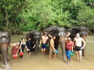 Hug and care for the Elephants + Enjoy a magnificent waterfall