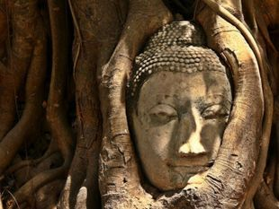 Amazing Ayutthaya! Check out The Old Vibe of Thailand !!