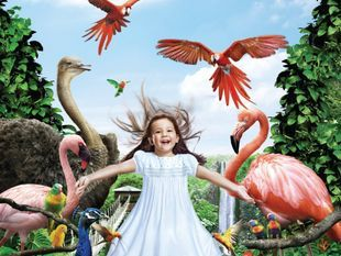 บัตรเข้าสวนนกจูร่ง ราคาพิเศษ (Jurong Bird Park)