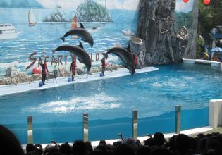 Lovely Dolphin show