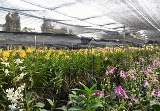 Stop to buy orchid plants from a local farm.
