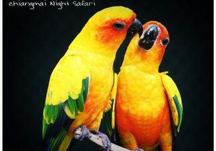Chiang Mai Night Safari: Discover exotic wildlife