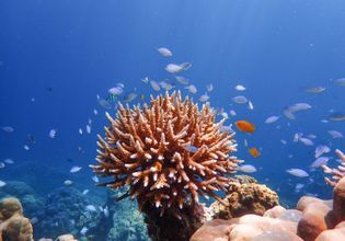 Many kinds of marine life and wonderful coral reefs