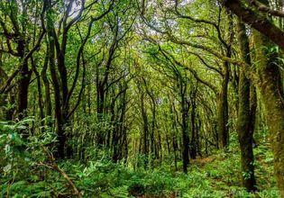 Trekking 3.6km. at Kew mae pan nature trail.