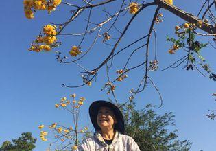 Beautiful nature blooming upon season