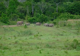 A lovely elephant family at KuiBuri National park