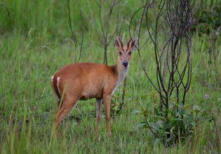 Wildlife in Khao Yai