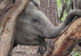Caring The Elephants in Doi Inthanon Elephant House