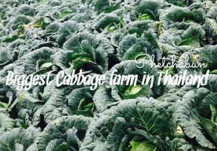 Explore the highest cabbage farm with unseen five million colorful mosaic tiles temple.