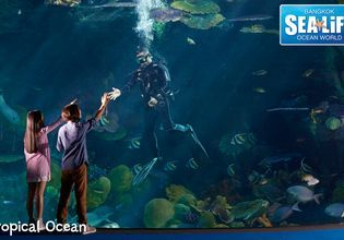 SEA LIFE Ocean World: Marine Magic
