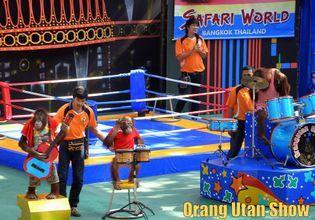 Orang Utan boxing show