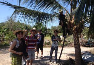 Enjoy coconut farm