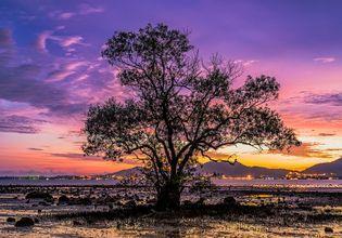 Unseen in Phuket