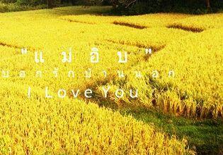 golden rice pad