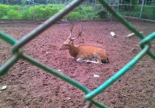 KKU Zoo
