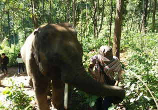 Hug and care for the Elephants + Enjoy a magnificent waterfall.