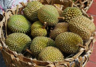 Munch munch and chill out at a Durian farm
