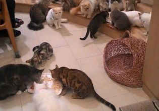 To All the Cat Lovers! Visit 2 Cat Cafes in One Day!