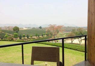 Chui Fong tea garden