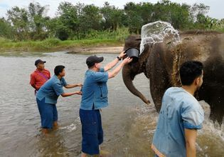 Bathing elephants in Ping River.